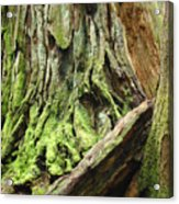 Redwood Trees Art Prints Baslee Troutman Acrylic Print