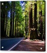 Redwoods Road Acrylic Print
