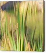 Reed Abstract II Acrylic Print