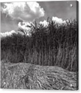 Reeds And Clouds Acrylic Print