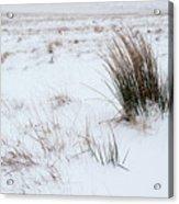 Reeds And Snow Acrylic Print