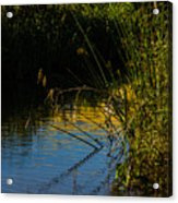 Reeds And The Riverside Acrylic Print