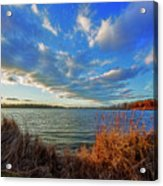 Reeds And Wind Acrylic Print