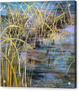 Reeds In The Water Acrylic Print