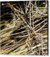 Reeds Reflected Acrylic Print