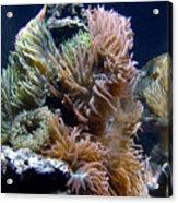 Reef-3 Acrylic Print
