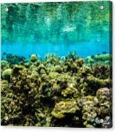 Reef At Ahnd Atoll Acrylic Print