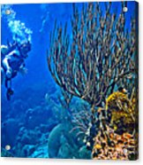 Reef Dive Acrylic Print