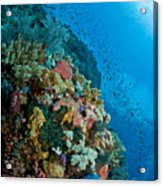 Reef Scene With Corals And Fish Acrylic Print