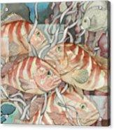 Reef Story Acrylic Print