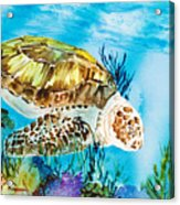 Reef Surfin Acrylic Print by Tanya L Haynes - Printscapes