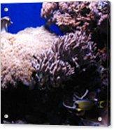 Reef Tank Acrylic Print