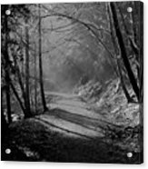 Reelig Forest Walk Acrylic Print