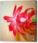 Refined Elegance Acrylic Print