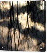 Reflect Acrylic Print