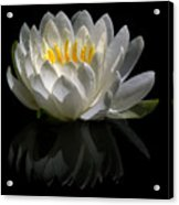 Reflected Lily  Acrylic Print