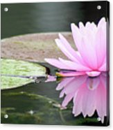 Reflected Water Lily Acrylic Print