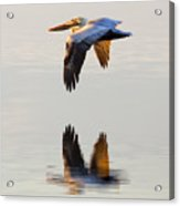 Reflecting Flight Acrylic Print
