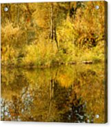 Reflecting On Autumn Leaves Acrylic Print