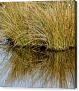 Reflecting Reeds Acrylic Print
