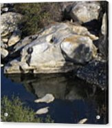Reflecting Rock-sequoia National Park Acrylic Print