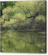 Reflecting Spring Green Acrylic Print