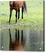Reflecting Horse Near Water Acrylic Print