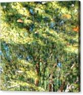 Reflecting Trees On Quiet Pond Acrylic Print