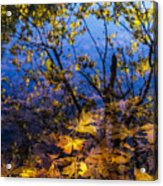 Reflection And Transparency Acrylic Print
