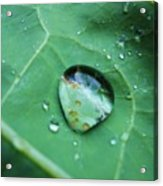 Reflection In A Dew Drop Acrylic Print
