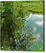 Reflection Of A Tree And Clouds Acrylic Print