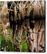 Reflection Of Cypress Knees Acrylic Print