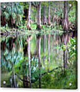 Reflection Of Cypress Trees Acrylic Print