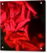 Reflection Of Red Roses Acrylic Print