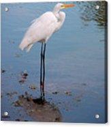 Reflection On Stilts Acrylic Print