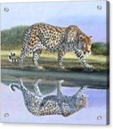 Reflection Stalk Acrylic Print