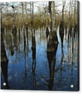 Reflections At Big Cypress Acrylic Print