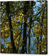 Reflections Fall Acrylic Print