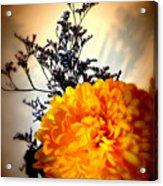 Reflections In Orange Acrylic Print