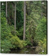 Reflections In Silver Falls State Park Acrylic Print