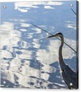 Reflections Of A Bird Acrylic Print