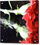 Reflections Of A Carnation Acrylic Print