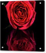 Reflections Of A Red Rose Acrylic Print