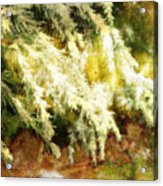 Reflections Of A Snow Acrylic Print