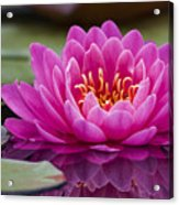 Reflections Of A Waterlily Acrylic Print