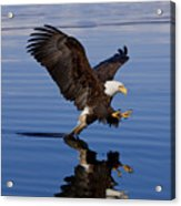 Reflections Of Eagle Acrylic Print by John Hyde - Printscapes