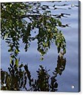 Reflections Of Life Acrylic Print