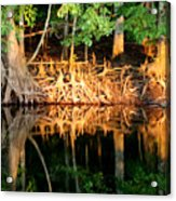 Reflections Of Our Roots Acrylic Print