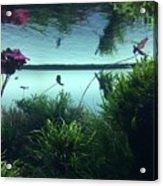 Reflections Of Waterlii Acrylic Print