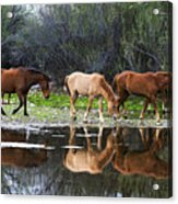 Reflections Of Wild Horses In The Salt River Acrylic Print
